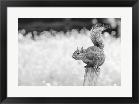 Framed Squirrel Print