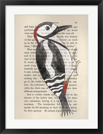 Framed Great Spotted Woodpecker Print