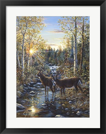 Framed Whitetail Deer Print