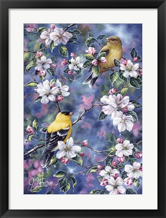 Framed Gold Finch & Blossoms Print