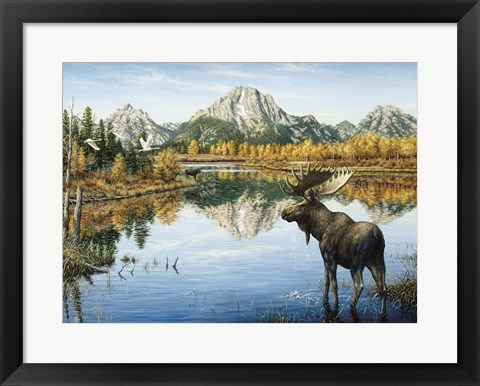 Framed Bull Moose Print
