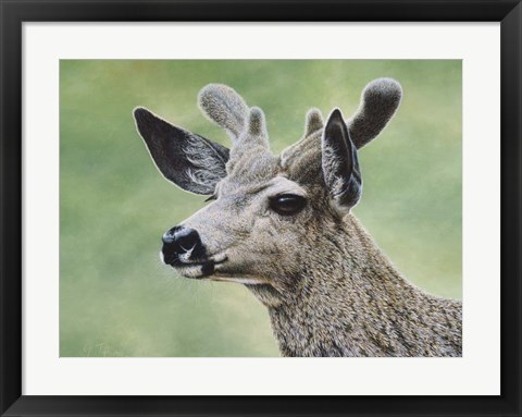 Framed Mule Deer In Velvet Print