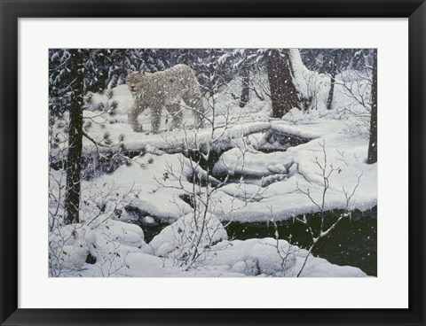 Framed Canadian Lynx & Snowshoe Hare Print