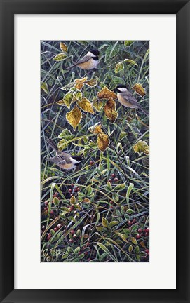 Framed Chickadee 2 Print