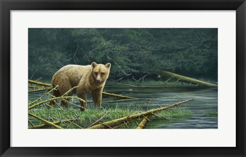 Framed Grizzly And Swallows Print
