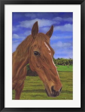 Framed Field Horse Print