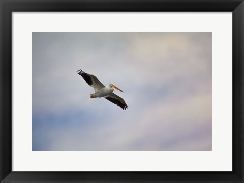 Framed Beautiful Day To Fly Print