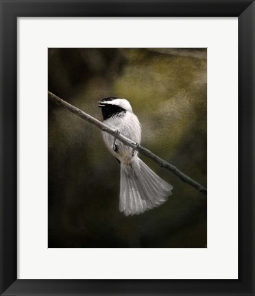 Framed Song In Your Heart Chickadee Print