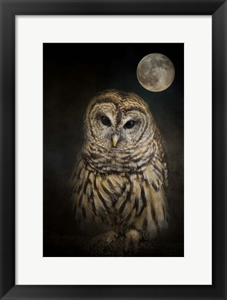 Framed Barred Owl And The Moon Print