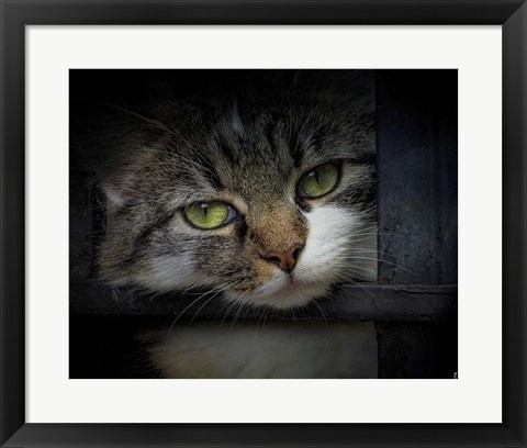 Framed Behind Bars Print