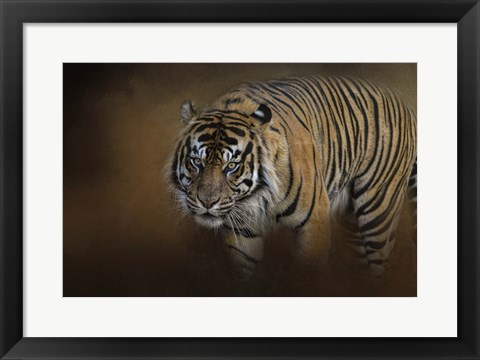 Framed Bengal Stare Print