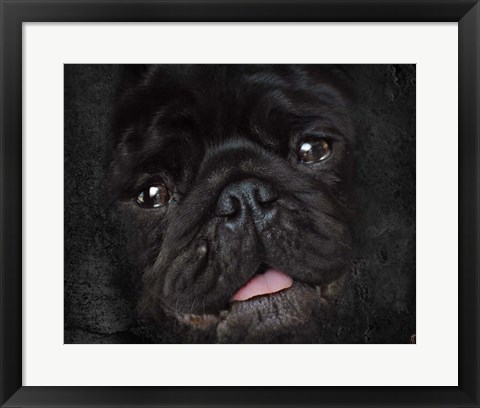 Framed Black Pug Portrait Print