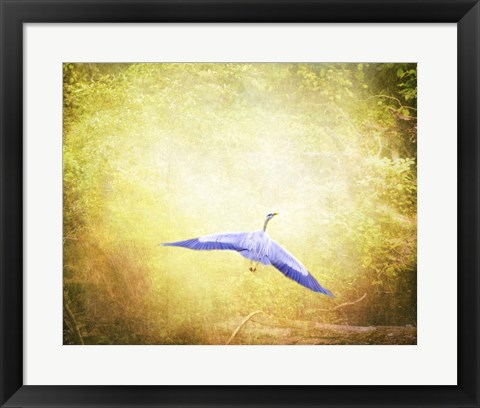 Framed Blue Heron In The Light Print