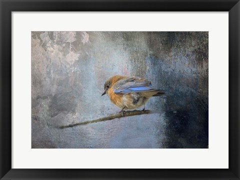 Framed Bluebird In Winter Print