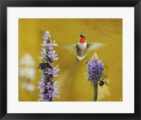 Framed Breakfast With The Bees Hummingbird Print