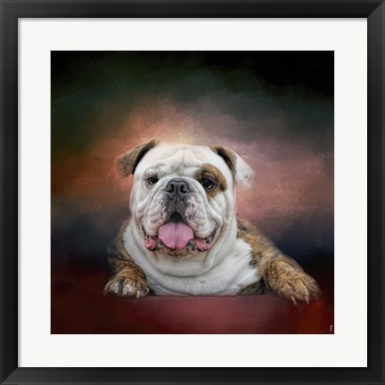 Framed Bulldog Hanging Out Print