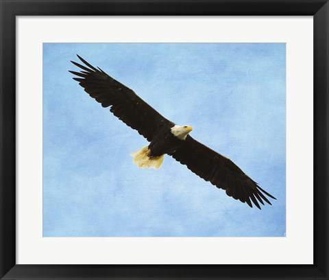 Framed By His Grace Bald Eagle Print