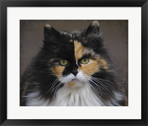 Framed Calico Cat Portrait Print