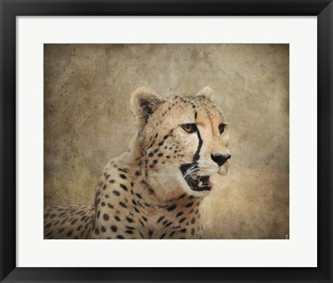 Framed Cheetah Print