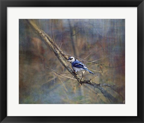 Framed Color My World Blue Jay Print