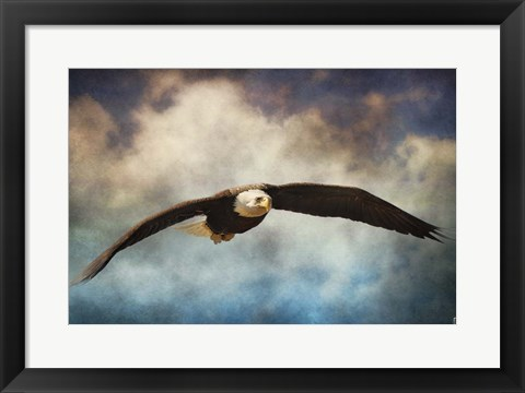 Framed Coming Home Bald Eagle Print
