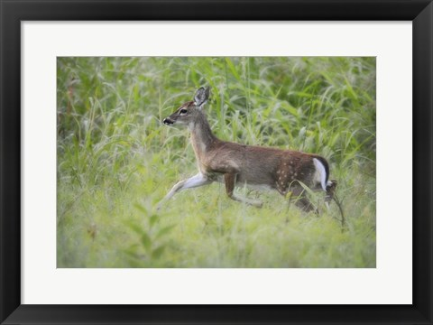 Framed Fawn In October Print