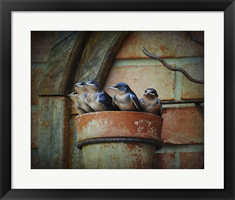 Framed Flower pot Swallows Print