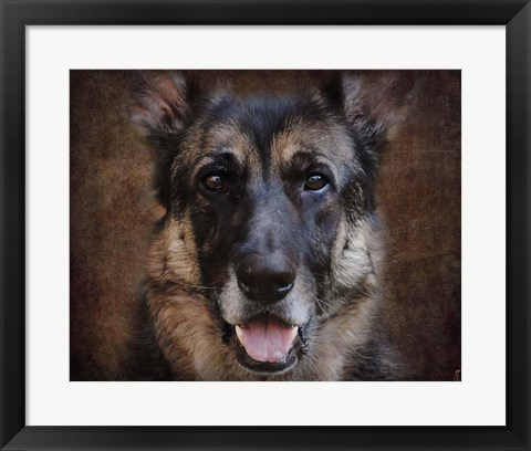 Framed German Shepherd Face Print