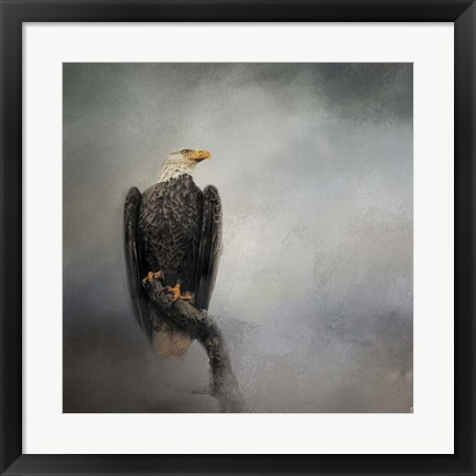 Framed High Perch Bald Eagle Print