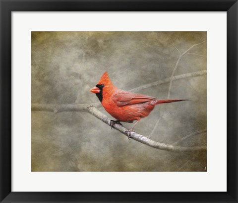 Framed His Red Glory Cardinal Print