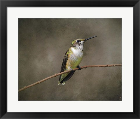 Framed Hummingbird Portrait Print