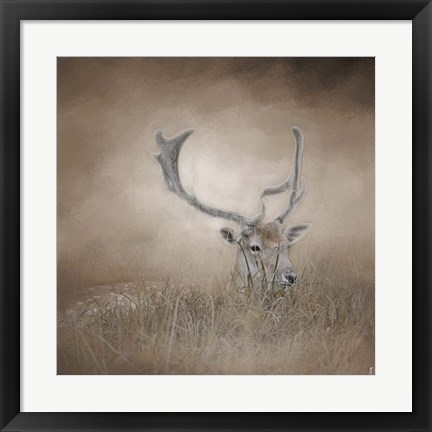 Framed In Plain Sight Sika Deer Print