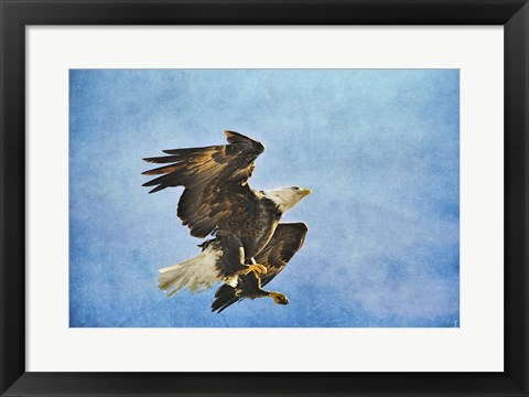 Framed Landing Gear Bald Eagle Print