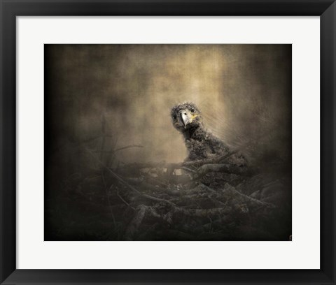 Framed Lone Eaglet In The Nest Print