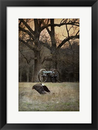 Framed Low Flyer Bald Eagle Print