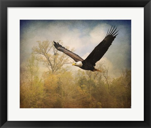 Framed Monarch Of The Skies Bald Eagle Print
