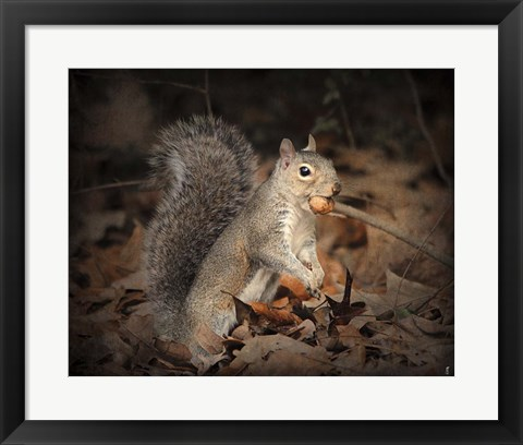 Framed More Than You Can Chew Squirrel Print