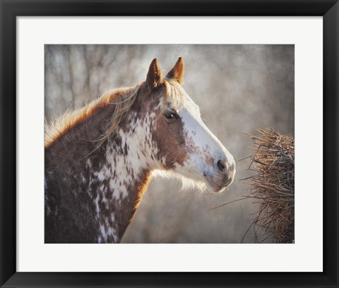 Framed No Sharing Horse Print