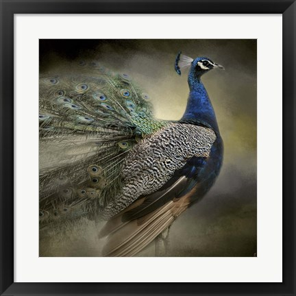 Framed Peacock 5 Print