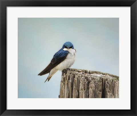 Framed Perched And Waiting Print