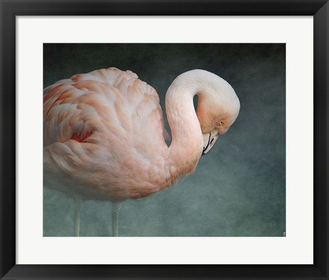 Framed Pink Flamingo 2 Print