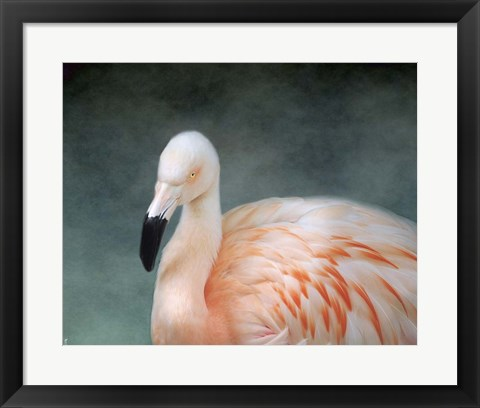 Framed Pink flamingo 3 Print