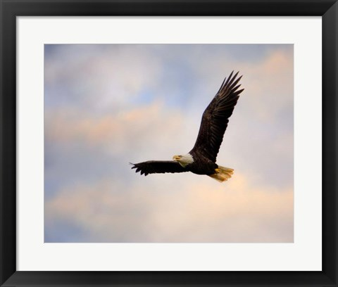 Framed Pinson Mounds Eagle 1 Print