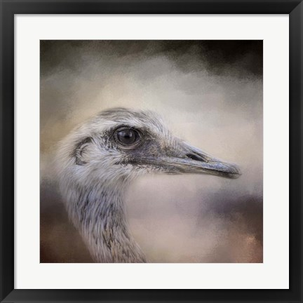 Framed Poised Ostrich Print
