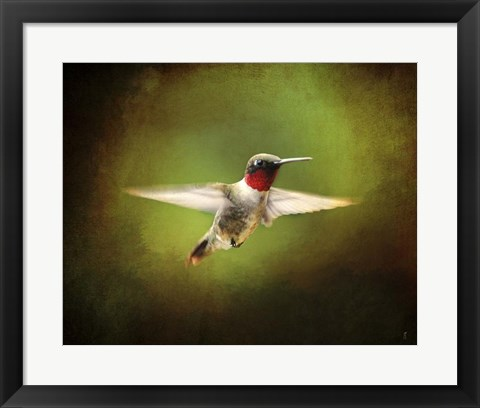 Framed Portrait Of A Hummingbird In Flight Print