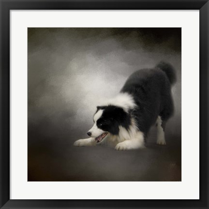 Framed Ready To Play Border Collie Print
