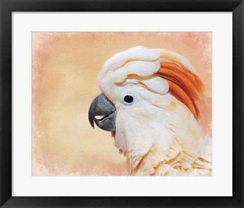 Framed Salmon Crested Cockatoo Portrait 1 Print