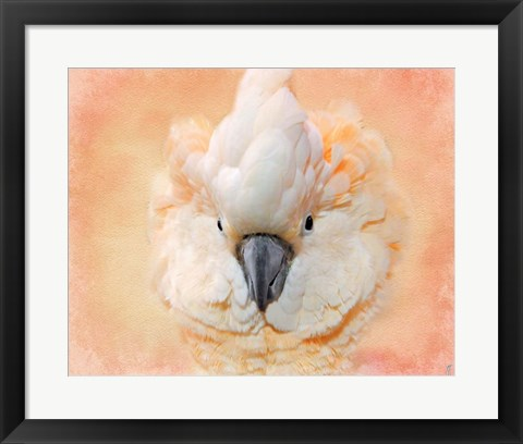 Framed Salmon Crested Cockatoo Portrait 2 Print