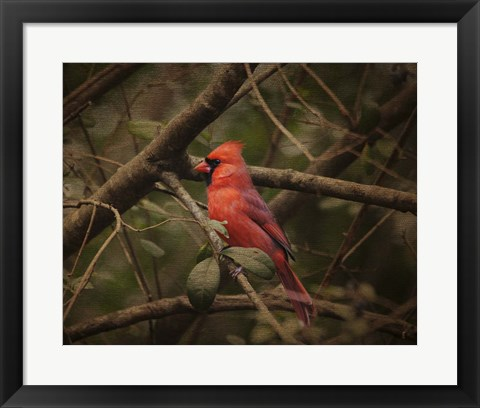 Framed Song Of The Red Bird 1 Print