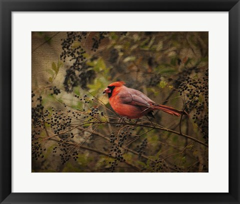 Framed Song Of The Red Bird 2 Print